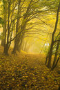 The Autumnal Forest Royalty Free Stock Photography