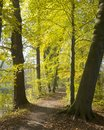 Autumnal forest amelisweerd near the dutch city of utrecht Royalty Free Stock Photo