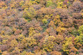 Autumnal forest the background of Stock Images