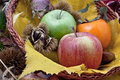 Autumnal fruit composition in a basket Stock Photos