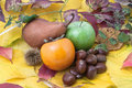 Autumnal fruit composition with twigs Stock Images