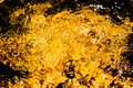 Autumnal golden yellow blurry abstract water background. Formed from sunny reflections of forest trees and movement in a river Royalty Free Stock Photo