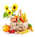 Autumnal harvest vegetables in basket on white background Stock Image