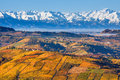Autumnal hills and snowy mountains in piedmont italy with yellow orange vineyards as mountain ridge on background northern Stock Photography