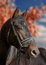 Autumnal horse portrait Royalty Free Stock Photo