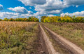 Autumnal landscape with earth road between sunflower and maize field Royalty Free Stock Photo