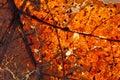 Autumnal leaf Royalty Free Stock Photo