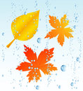 Autumnal leaf in the rain Royalty Free Stock Photo