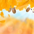 Autumnal leaves autumn background yellow Stock Image