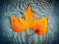 Autumnal leaves on denim vignetting photo of the textile background Royalty Free Stock Photos