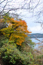 Autumnal leaves the of hakone during autumn of japan Royalty Free Stock Images