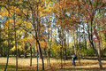 Autumnal maple forest the photographer are shooting in Royalty Free Stock Images