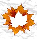 Autumnal maple leaves Royalty Free Stock Image