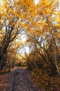Autumnal melancholy forests in northern russia Stock Photo