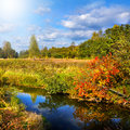 Autumnal nature scenery forest and river Royalty Free Stock Photography