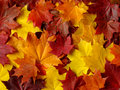 Autumnal palette Royalty Free Stock Photo