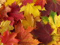 Autumnal palette Royalty Free Stock Images