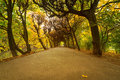 Autumnal park alley beautiful in the yellow Stock Images