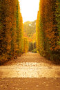 Autumnal park alley beautiful in the yellow Royalty Free Stock Photos