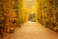 Autumnal park alley beautiful in the yellow Royalty Free Stock Images