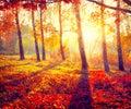 Autumnal Park. Autumn Trees Royalty Free Stock Photo