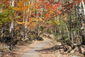 Autumnal path the footpath in forest Royalty Free Stock Photo