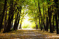 Autumnal pathway in forest Royalty Free Stock Images