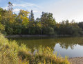 Autumnal pond tranquil scenery with reed Stock Photos