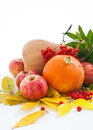Autumnal pumpkins apples and ashberry with fall leaves stll life Stock Image