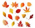 Autumnal red yellow and brown leaves isolated on white background for seasonal design Stock Photography