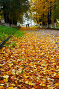 Autumnal scenery in city park nature central kostroma Stock Photography