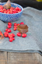 Autumnal still life outdoors red berrys hips and leafs on the blue plate Stock Image