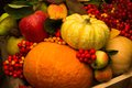 Autumnal still life thanksgiving day Royalty Free Stock Photography