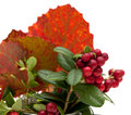 Autumnal stilllife with lingonberries and aspen leaves Stock Photo