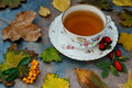 Autumnal tea with herbs Royalty Free Stock Image