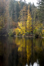 Autumnal tints colored tree is refelcting in the water Royalty Free Stock Photos