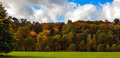 Autumnal trees a picture of a beautiful forest in england Royalty Free Stock Image