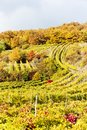 Autumnal vineyards Stock Photos