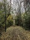 Autumnal Walks.