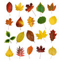 Autumny leaves Stock Image