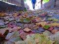 Autunm colorful leaves foliage of Stock Photo