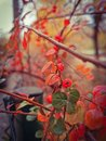 Autunm leaves Royalty Free Stock Photo