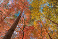 Autunm trees multi color in the forest Royalty Free Stock Photos