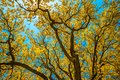Autunm trees in the park, perfect fall scenery Royalty Free Stock Photo