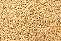 Oat cereal grain. Closeup of grains, background use. Royalty Free Stock Photo