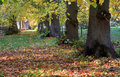 Avenue d autumn lime trees Photos libres de droits
