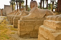 Avenue of sphinxes the forming part luxor temple in egypt Royalty Free Stock Images