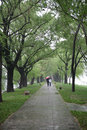 Avenue after spring rain Stock Photography