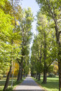 Avenue with tall green trees long alley or surrounded by Royalty Free Stock Photo