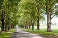 Avenue of trees lining driveway leading to homestead Stock Photos